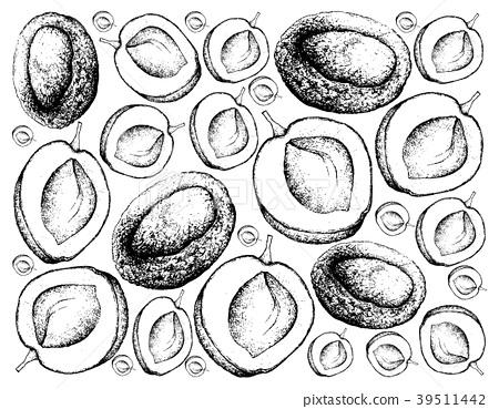 Hand Drawn Background of Fresh Apricote Fruits 39511442