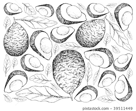 Hand Drawn Background of Fresh Green Avocados 39511449
