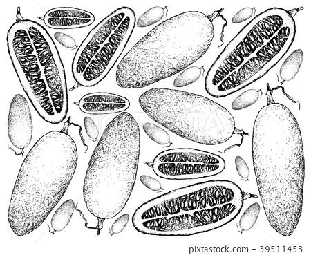 Hand Drawn Background of Fresh Cassabanana Fruits 39511453