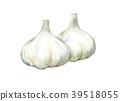마늘, 수채화 물감, 수채화 39518055