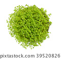Garden cress in white bowl from above over white 39520826