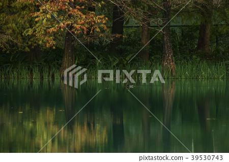湖影 39530743