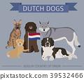 dog, Dutch, breed 39532466
