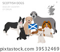 Dogs by country of origin. Scottish dog breeds 39532469