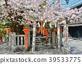 gion shirakawa, cherry blossom, yasaka shrine 39533775
