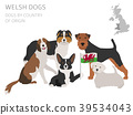 Dogs by country of origin. Walsh dog breeds. 39534043
