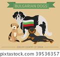 dog, Bulgarian, Bulgaria 39536357