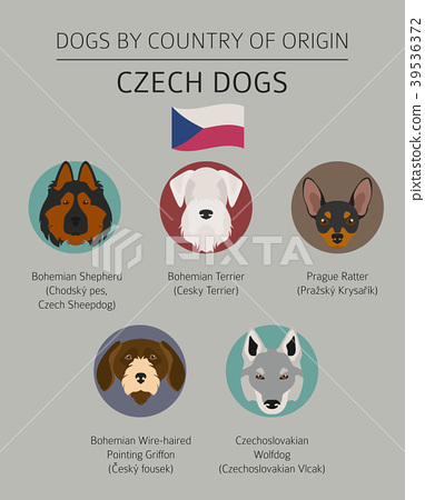 Dogs by country of origin. Czech dog breeds 39536372