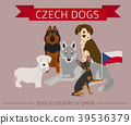 dog, Czech, breed 39536379