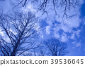 winter, nature, natural 39536645