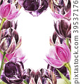 Botanical blank for text. Watercolor Tulips 39537176