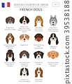 Dogs by country of origin. French dog breeds 39538188