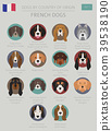 Dogs by country of origin. French dog breeds 39538190