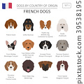 Dogs by country of origin. French dog breeds 39538195