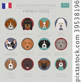 Dogs by country of origin. French dog breeds. 39538196