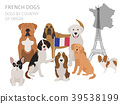 Dogs by country of origin. French dog breeds. 39538199