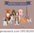 Dogs by country of origin. French dog breeds. 39538200