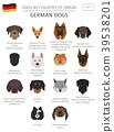 dog, German, infographic 39538201