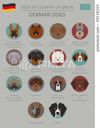 Dogs by country of origin. German dog breeds 39538204