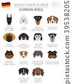 dog, German, Germany 39538205