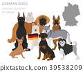 dog, German, breed 39538209