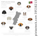 dog, Portugal, infographic 39538213