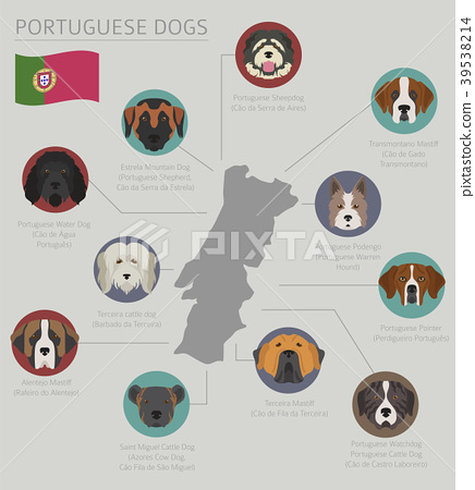 Dogs by country of origin. Portuguese dog breeds 39538214