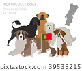 dog, Portugal, infographic 39538215