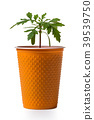 young growing plant in a pot 39539750