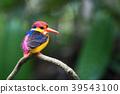Beautiful bird, Oriental dwarf kingfisher 39543100