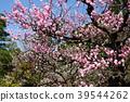 문화재 지정 정원 특별 명승지 초봄의 겐로쿠엔 39544262