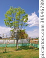 風景 自然 植物 39546789