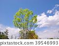 風景 自然 翠綠 39546993