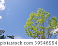 風景 自然 翠綠 39546994