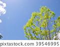 風景 自然 翠綠 39546995