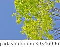 風景 自然 翠綠 39546996