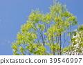 風景 自然 翠綠 39546997