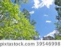 風景 自然 翠綠 39546998