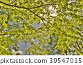 風景 自然 翠綠 39547015
