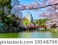 姬路城堡櫻桃藍天 39548706