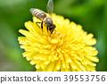蜜蜂 花朵 花卉 39553756
