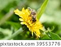 蜜蜂 花朵 花卉 39553776