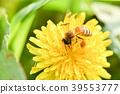蜜蜂 花朵 花卉 39553777