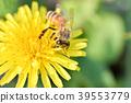 蜜蜂 花朵 花卉 39553779