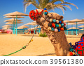 camel, egypt, beach 39561380