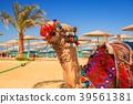camel, egypt, beach 39561381