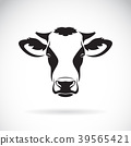 Vector of a cow head design on white background. 39565421