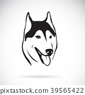 Vector of siberian husky dog head design. Pet. 39565422