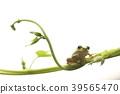 樹蛙 牽牛花 日本 39565470