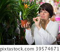 Customer choosing bromelia 39574671